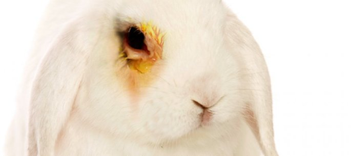 an argument against animal experimentation in the united states Here are some animal testing arguments highlighting both the positive as well as   while many of us would unanimously agree upon the factors of cruelty and  right to  violation of animal rights is a prominent argument against animal  testing.